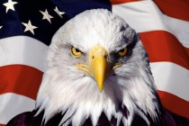 eagle-flag-usa
