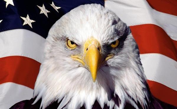 eagle-flag-usa