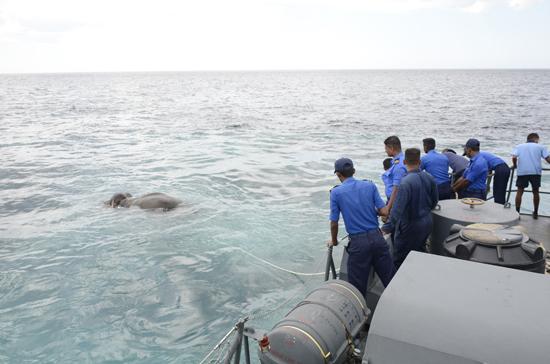 elephant-rescue (1)